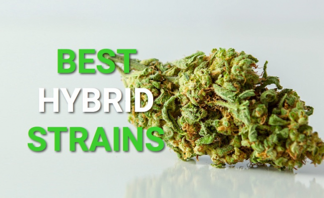 Hybrid-Strains-Fantastic Weeds
