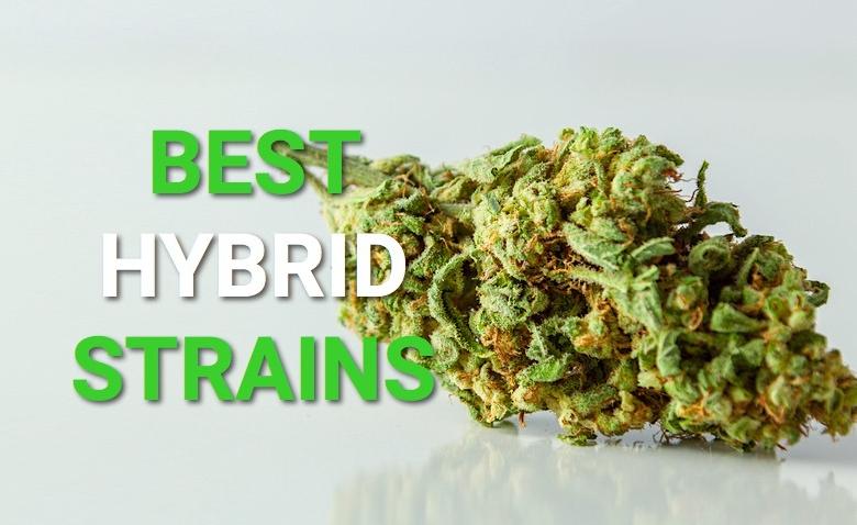 Hybrid-Strains-Fantastic Weeds
