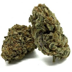 Purple-Candy-Hybrid-Flower-Fantastic-Weeds-3
