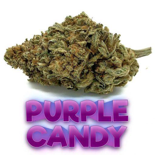 Purple-Candy-Hybrid-Flower-Fantastic-Weeds-5