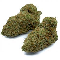 El-Dorado-Hybrid-Flowers-Fantastic-Weeds-2
