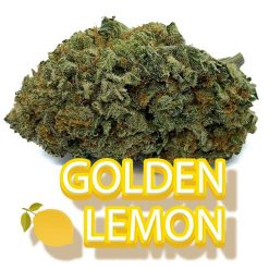 Golden Lemon - Fantastic Weeds