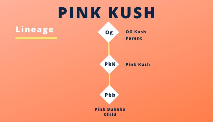 Fantastic Weeds- Pink Kush